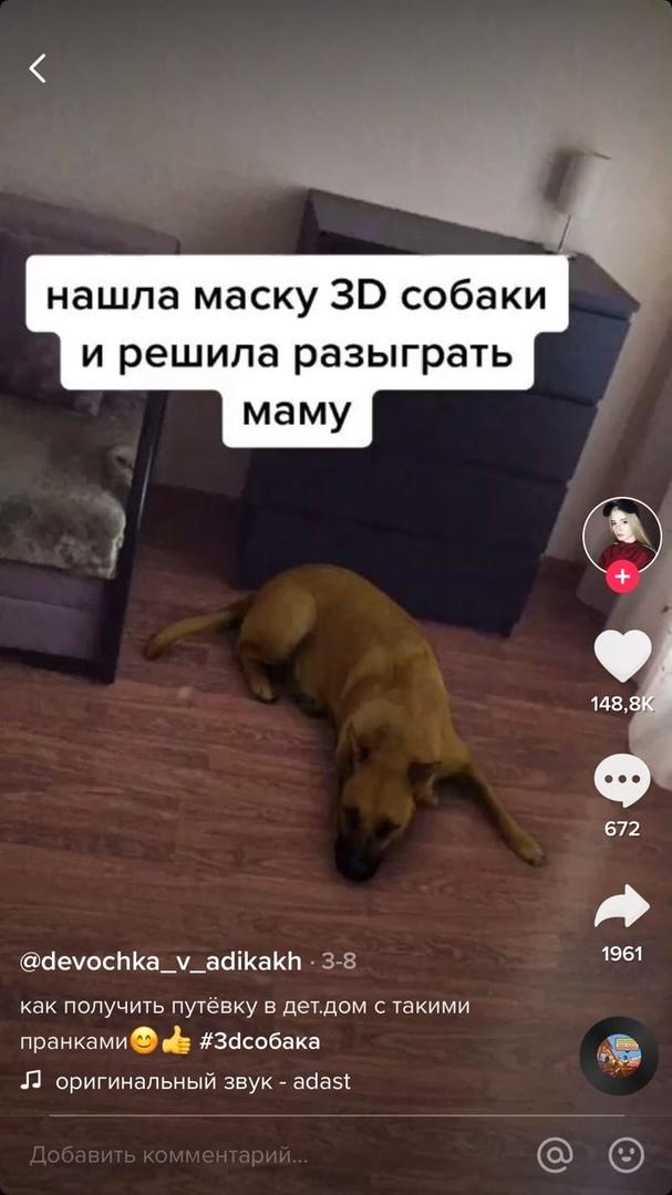 Маска собаки инстаграм
