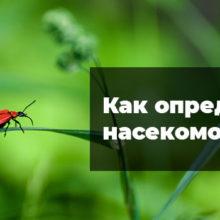 Как узнать насекомое по фото онлайн