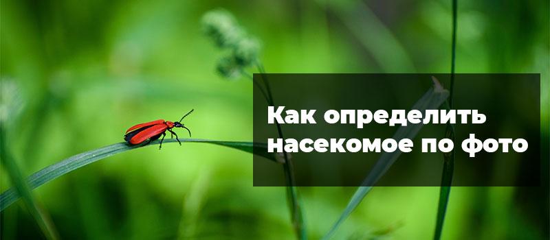 Как определить насекомое по фото